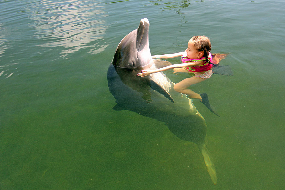 Swim with the Dolphin