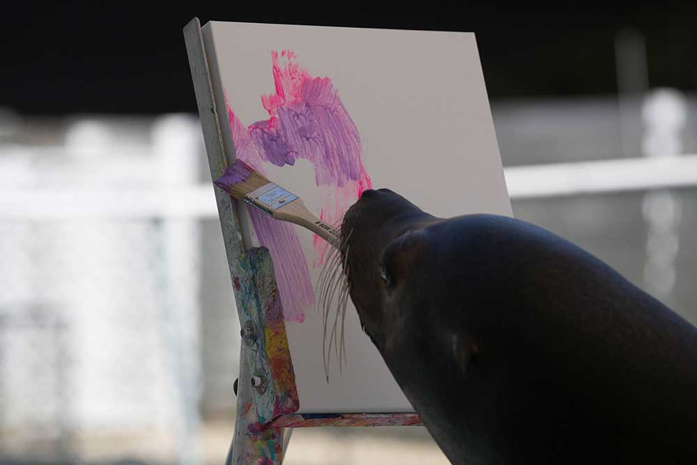 Paint with the Sea Lion