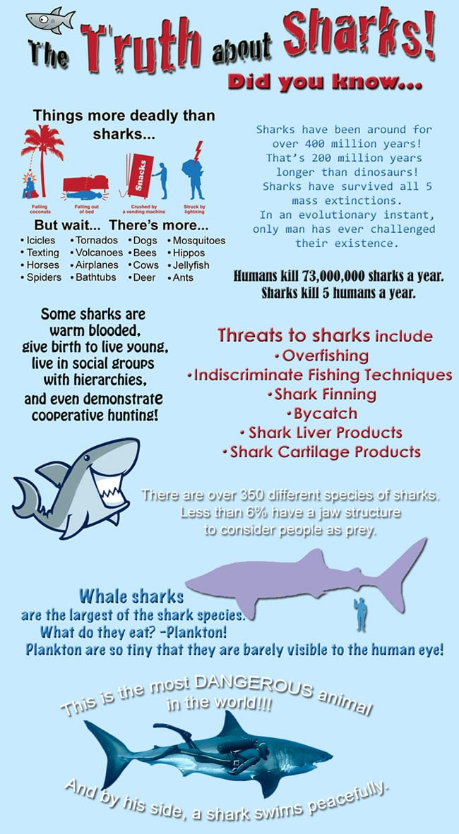 The Truth About Sharks
