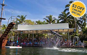 Swim With Dolphins In The Florida Keys Theater Of The Sea
